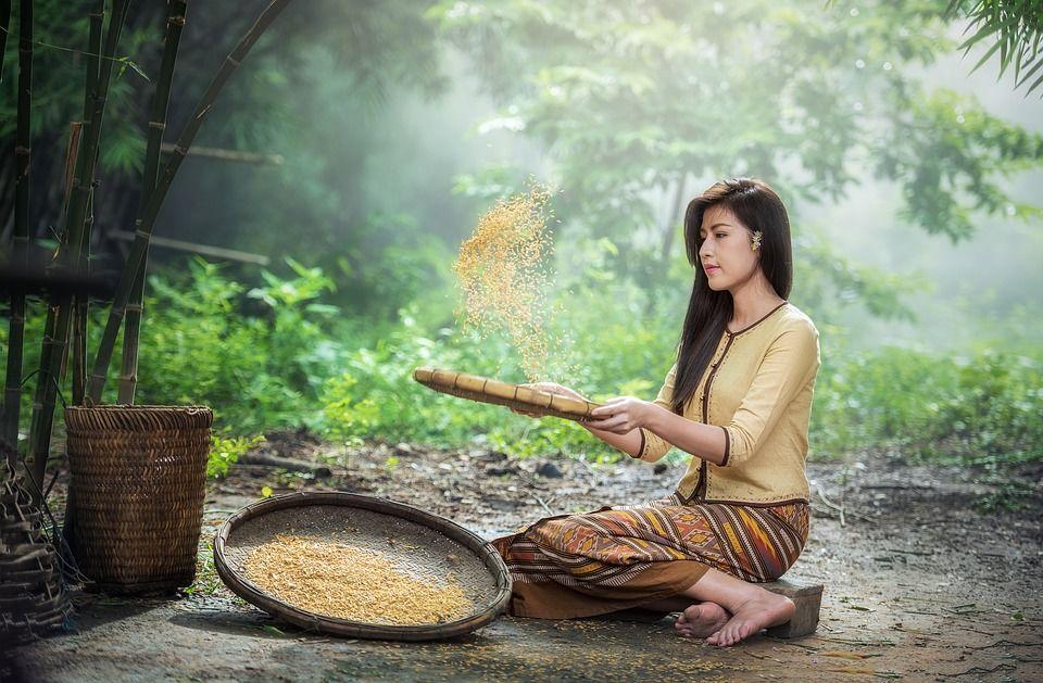 natural ryža, ryzova kura