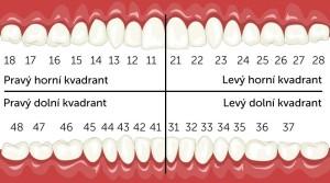 zuby 1