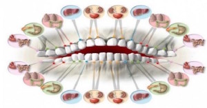zuby-organy