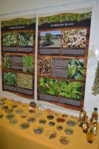 vôňa a chuť korenia 4